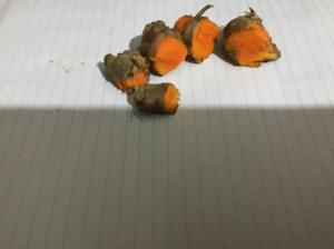 Fresh local tumeric seeds